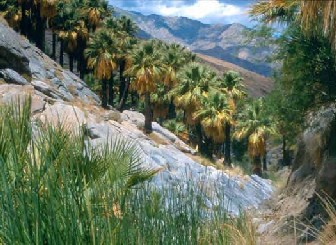 Palm Canyon - Photo by Pam Lennon