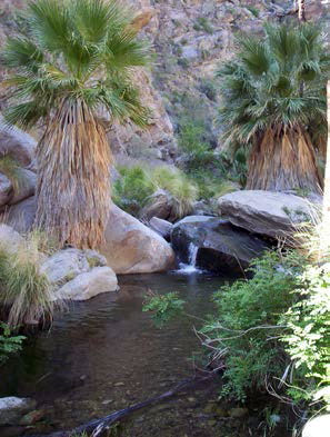 Photo of Murray Canyon Palm Oases