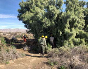 Photo of workers Partnership Tamarisk Removal Project